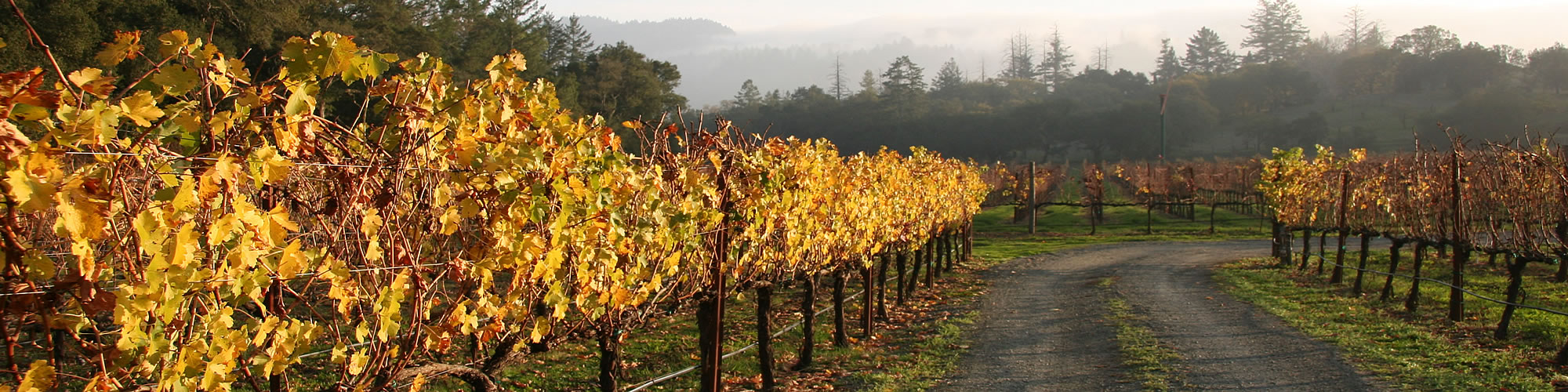 sonoma wine country vacation