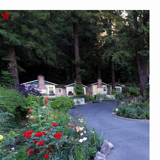 fern grove cottages, guerneville bed and breakfast